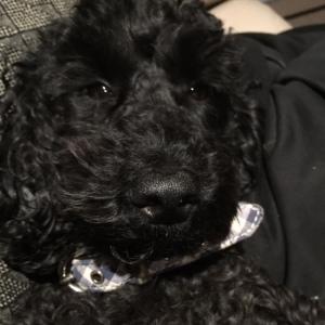 B Dog
